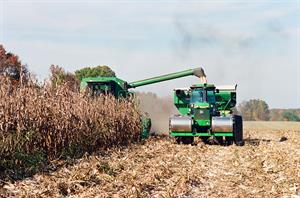 Corn harvest photo