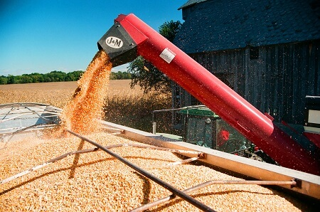Auger conveyor moving grain to a semi